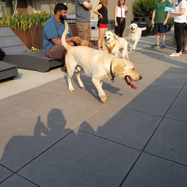Yappy hour was so much fun this week! We love all of our dogs here! #liveatverve #greystarseattle #dogsofverve
